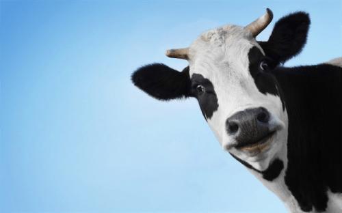 детское питание для детей с непереносимостью коровьего белка