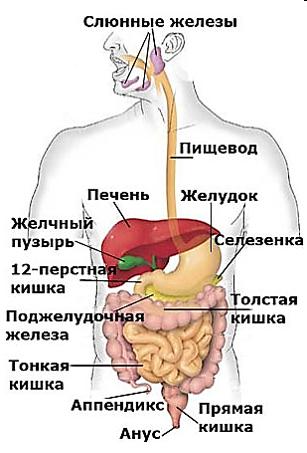 лечебное питание для детей с муковисцидозом