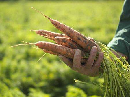 органическое питание для детей производители