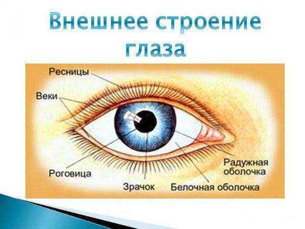 питание для детей с нарушением зрения