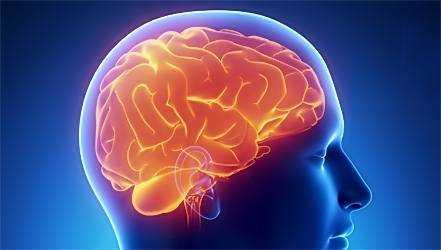 питание для мозга и нервной системы для детей