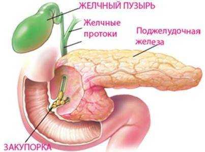 питание при холестазе у детей