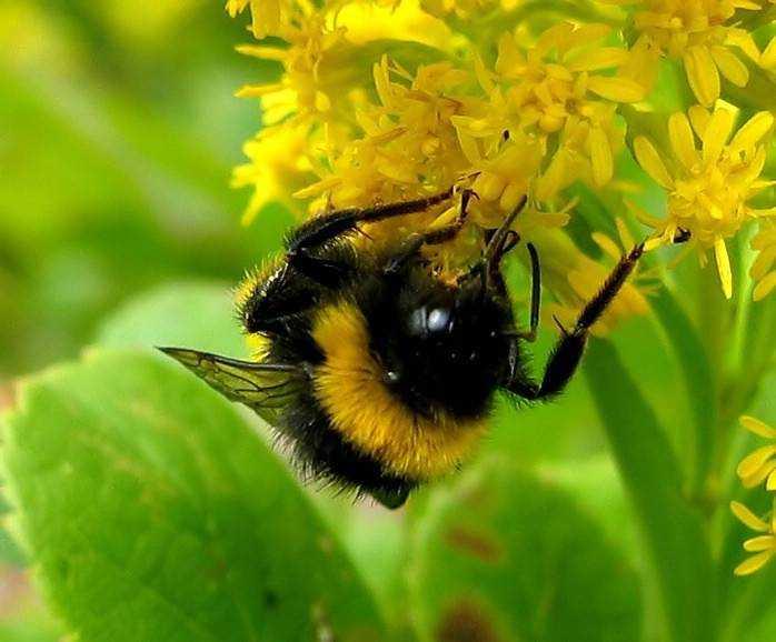питание насекомых для детей