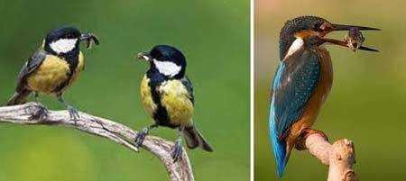 питание птиц для детей