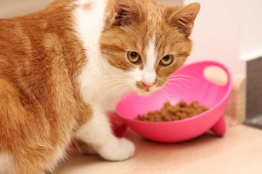можно ли кормить котенка детским питанием для детей